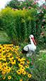 Location gite de vacances en Alsace, Bas-Rhin, ? Niederhaslach