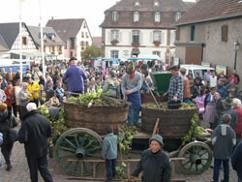 Villages d'Alsace, Marlenheim
